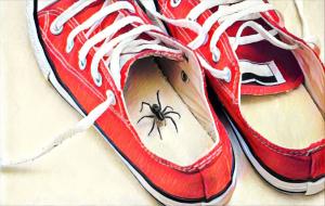 Shoe Spiders